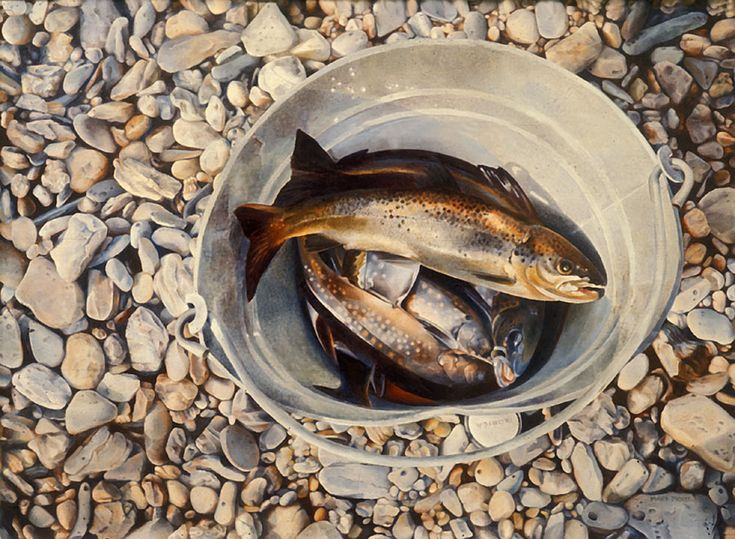 Mary Pratt, Trout in a Bucket