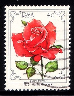 South Africa Postage stamp ; Rose