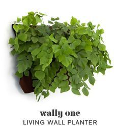 Put one of these on each section of outdoor deck. One with basil, one with cilantro, etc