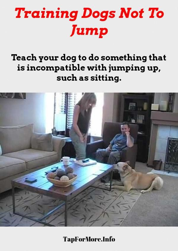 Stop Dog Jumping And Teach Dog To Fetch Check The Image For Lots
