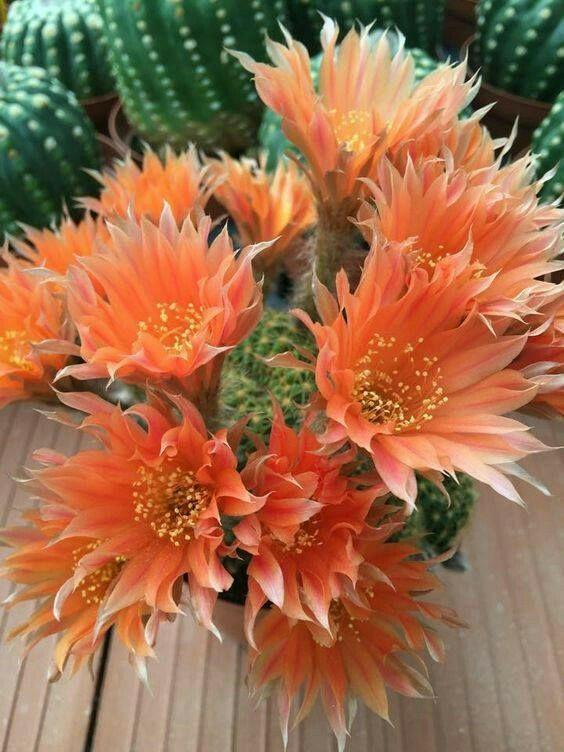 Charm Bracelet - Red Cactus Flowers by VIDA VIDA 2Y4hcr