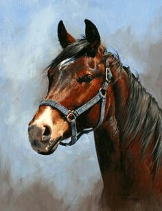Horse is a beautiful animal