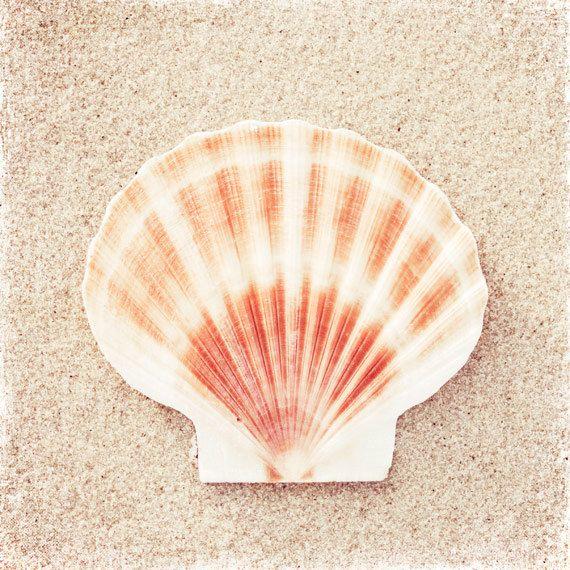 Seashell Photography - beach sea shell peach beige white ...