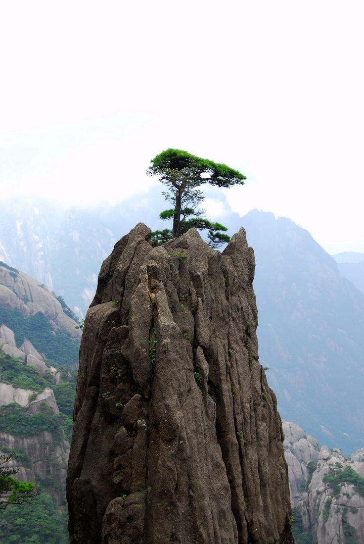Tree China