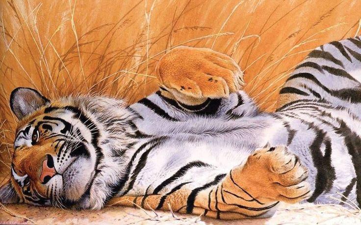 Descargar gratis tigre,  gato grande Fondos de escritorio en la resolucin 1920x1200 — imagen №156474
