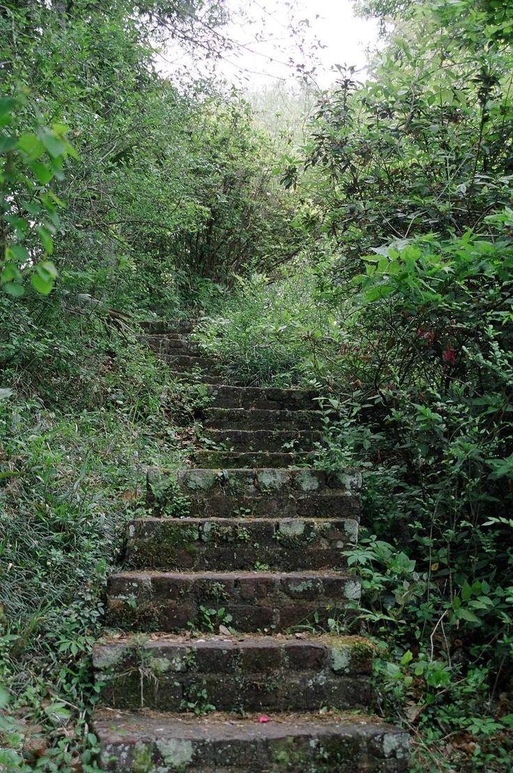 secret garden - Mepkin Abbey, Moncks Corner.  I love this...love pathways