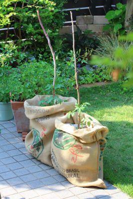 今年のトマトは袋栽培|おうちnoコト