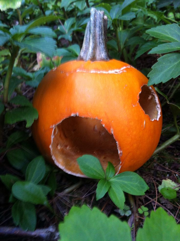 Carved mini pumpkin=adorable fairy house