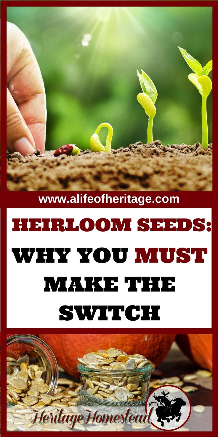 Heirloom Seeds Why You MUST Make the Switch Organic