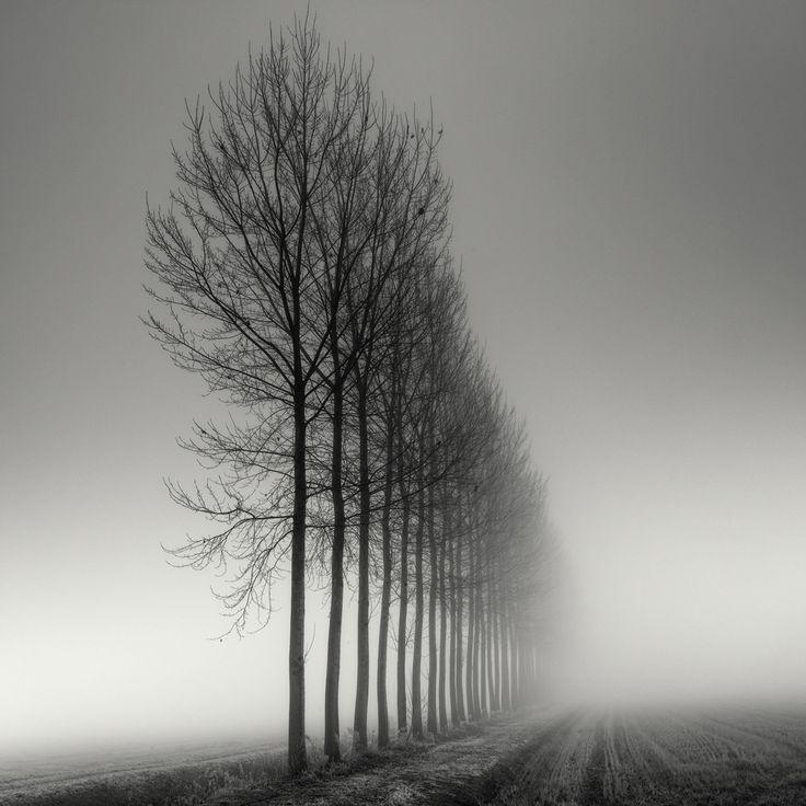 Aligned, photography by Pierre Pellegrini. In Nature, Vegetal, Tree, forest. Aligned, photography by Pierre Pellegrini. Image #351614