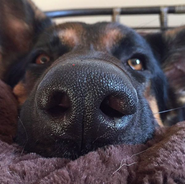 ASK BARKPOST ANYTHING: So What's Up With My Dog's Wet Nose?