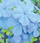 Moon Valley Nursery AZ plant guide