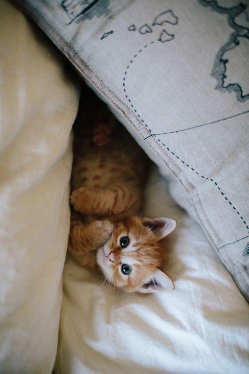 <3 Innocent Ginger Tabby Kitten - this little fellow looks like my precious kitten!!! | Photo from alittlebitofsillinessreally.Tumblr.com