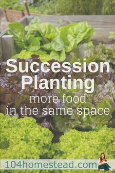 Succession planting is basically growing one crop after another. It's easy in warm climates, but even those of us up in Maine can do it.