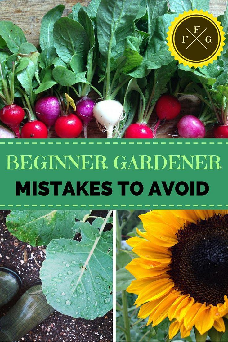Beginner Gardener Mistakes to Avoid