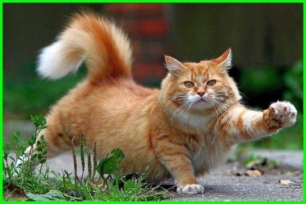 Nama Kucing Korea Dan Jepang Yang Bagus Lucu Dan Keren Beserta Artinya Dunia Fauna Hewan Binatang Tumbuhan Kucing Tabby Kucing Anjing Hewan