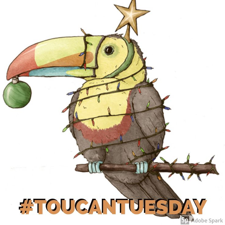 Toucan Tuesday hopes you had a safe and happy holiday. #toucan #toucans #itsstillathing