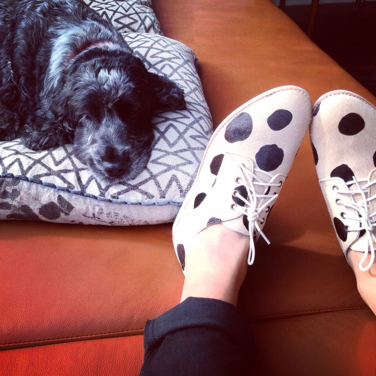Day 80 - New shoes!!! #mollynotimpressed
