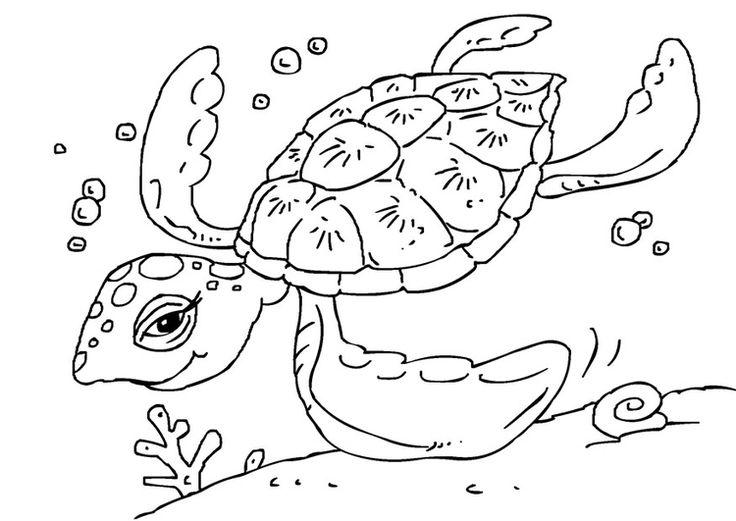 17 beste afbeeldingen duiken op krabben