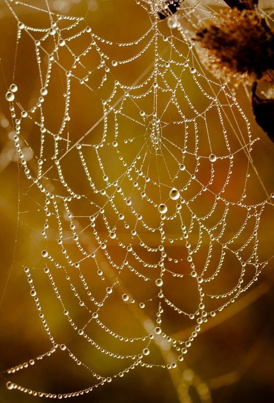 A water jeweled web… Mother Nature at play! = ) ~Charlotte (PixieWinksFairyWhispers)