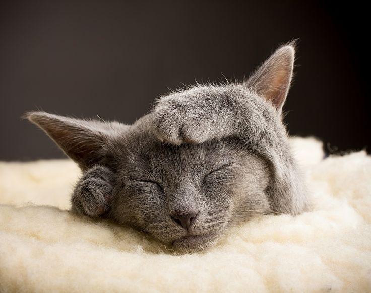 Długi weekend tuż tuż ...   #weekend #fototapeta24pl #fototapeta #kot #cat