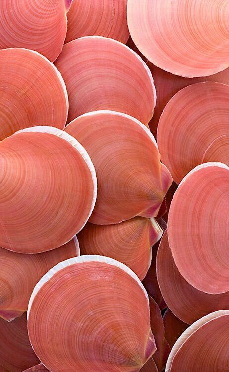 coral seashells, gorgeous color and texture | peach, salmon pink