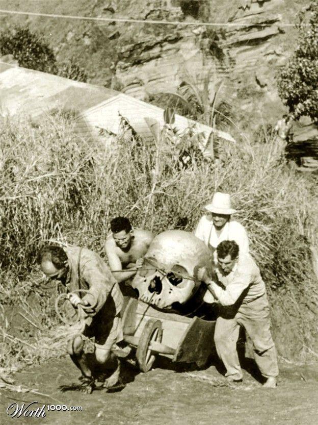310 best images about gaint sheletons on pinterest   the skulls, Skeleton