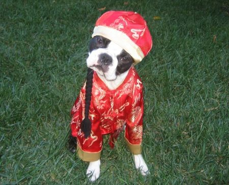Google Image Result for http://3113.com/cute_pet_costumes/dog-in-chinaman-costume.jpg