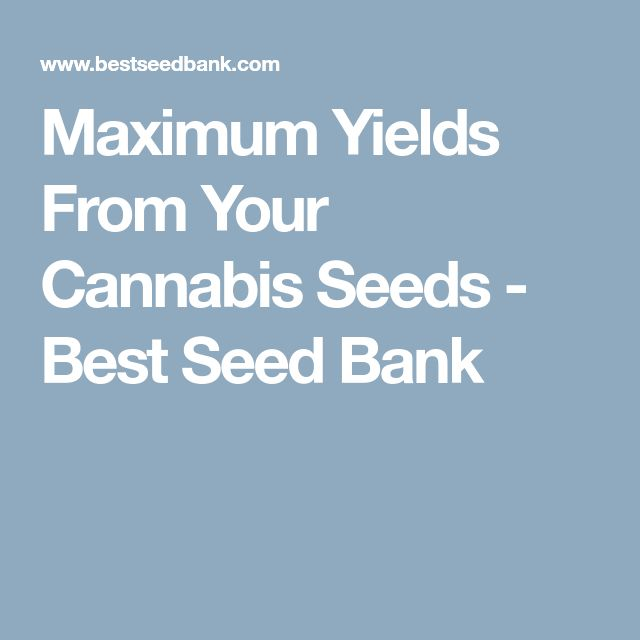 Maximum Yields From Your Cannabis Seeds - Best Seed Bank