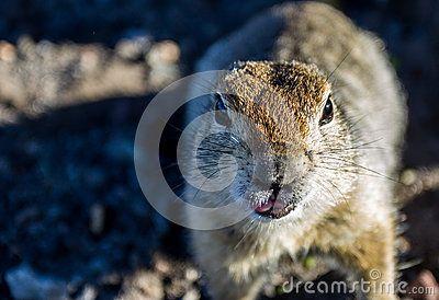 Kamchatka 2014 animal fauna portait