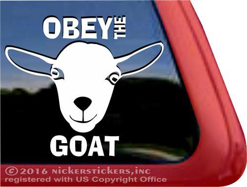 Buying Your First Nigerian Dwarf Goat