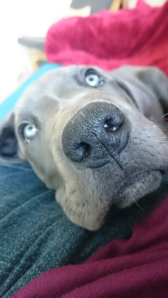 Beautiful boy 9 weeks