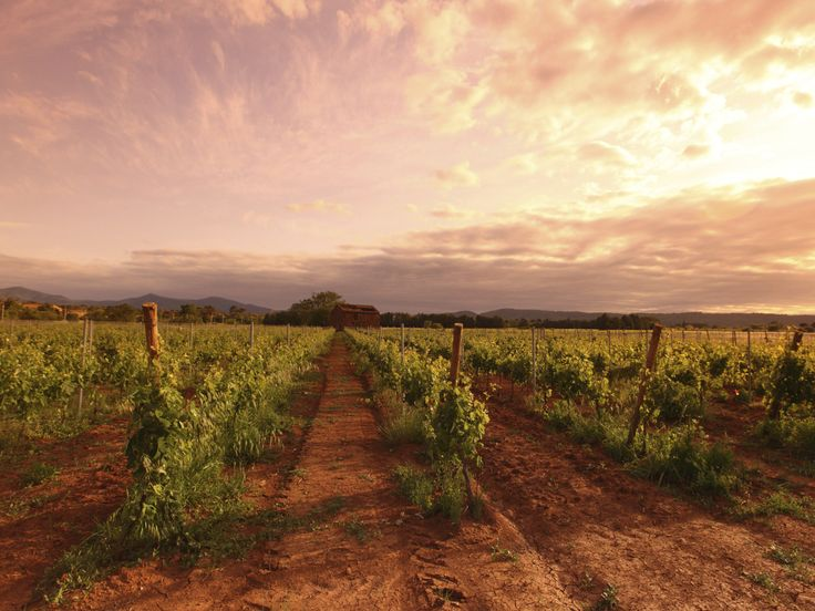 Your Guide to Barossa Wineries