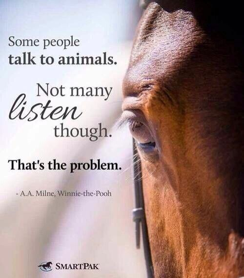 Always have your ears & eyes open...one of my Dad's teachings when around horses!