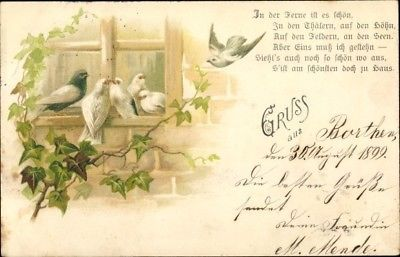 Litho Tauben vor einem Fenster, Efeuranken, In der Ferne ist es schön - 1848924