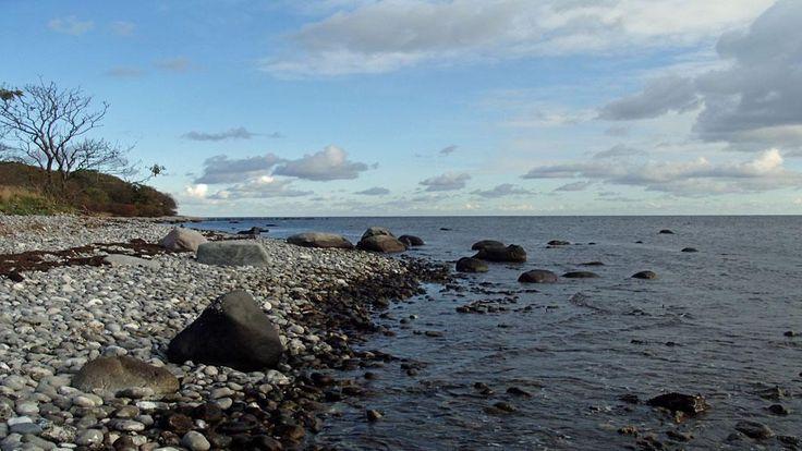 Fiske Stevns klint