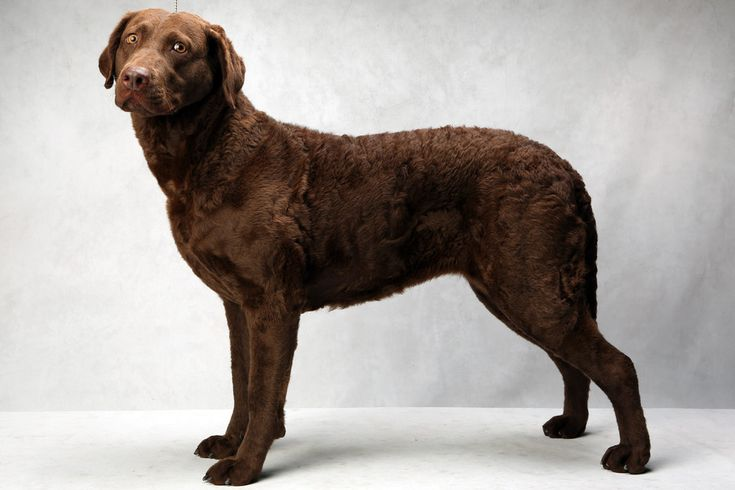 Westminster Dog Show Best In Breed