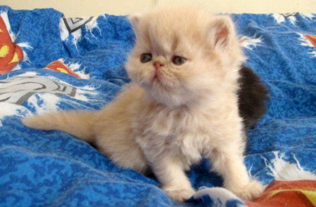 my persian cat http://ift.tt/2f3YxIk