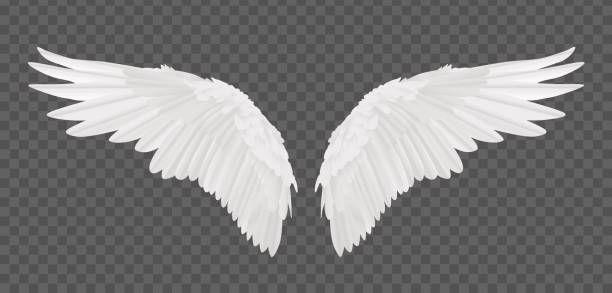 Vector Realistic Angel Wings Isolated On Transparent Background Fotos De Alas De Angel Alas De Angel Png Alas De Angel