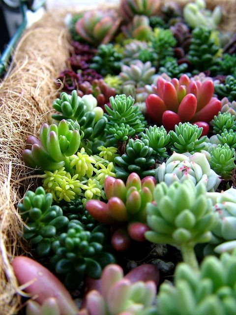 Small Succulents.. i think cacti are so pretty! can't wait to grow some around my apartment.