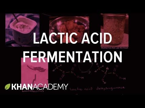 Lactic acid fermentation. How organisms like lactobacillus convert pyruvic acid to lactic acid and oxidize NADH to NAD+ in the process.
