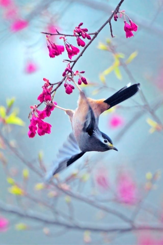 bird, flowers, art, backgrounds, iphone, smart phone, htc