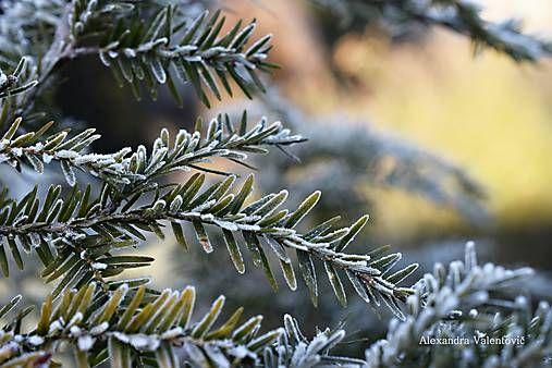 AlexandraValentovic / Veselé ráno winter