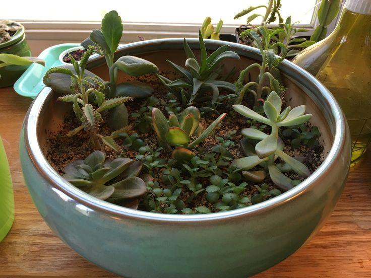 best 25 succulent bowls ideas on pinterest suculent plants dish garden and plants for terrariums. Black Bedroom Furniture Sets. Home Design Ideas