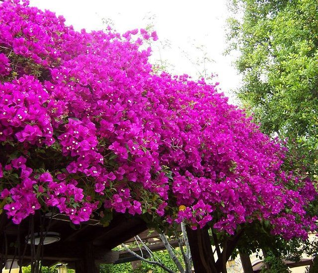 218 best images about garden flower beds on pinterest for Hardy flowering trees