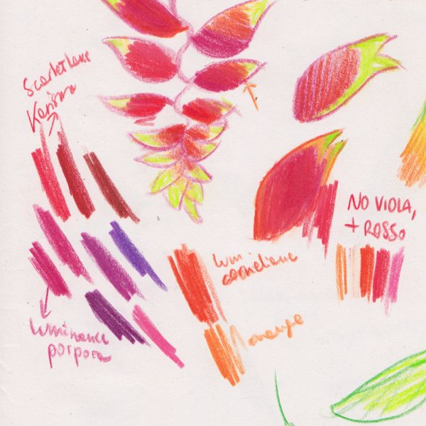 """Heliconia colours study, for """"Ciacio in Amazonia"""" picture book by Sarah Khoury"""