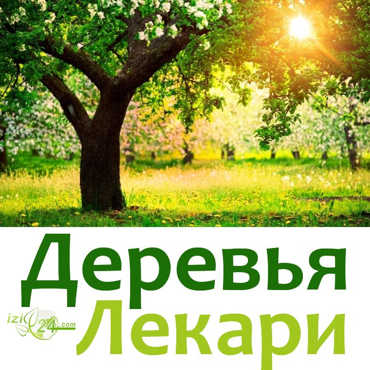 """ДЕРЕВЬЯ - ЛЕКАРИ. Современные люди вышли из-под покровительства деревянных домов и поселились в """"каменных джунглях"""". Может это и стало причиной многих заболеваний? И все же во всех культурах мира к деревьям относятся как к живым существам, которые наподобие добрых лекарей помогают человеку излечиться от телесных и психологических недугов. Значит, вернуть здоровье вполне реально, просто надо обратиться к мудрости и опыту наших предков, знавших целительную способность деревьев. ВМЕСТО…"""