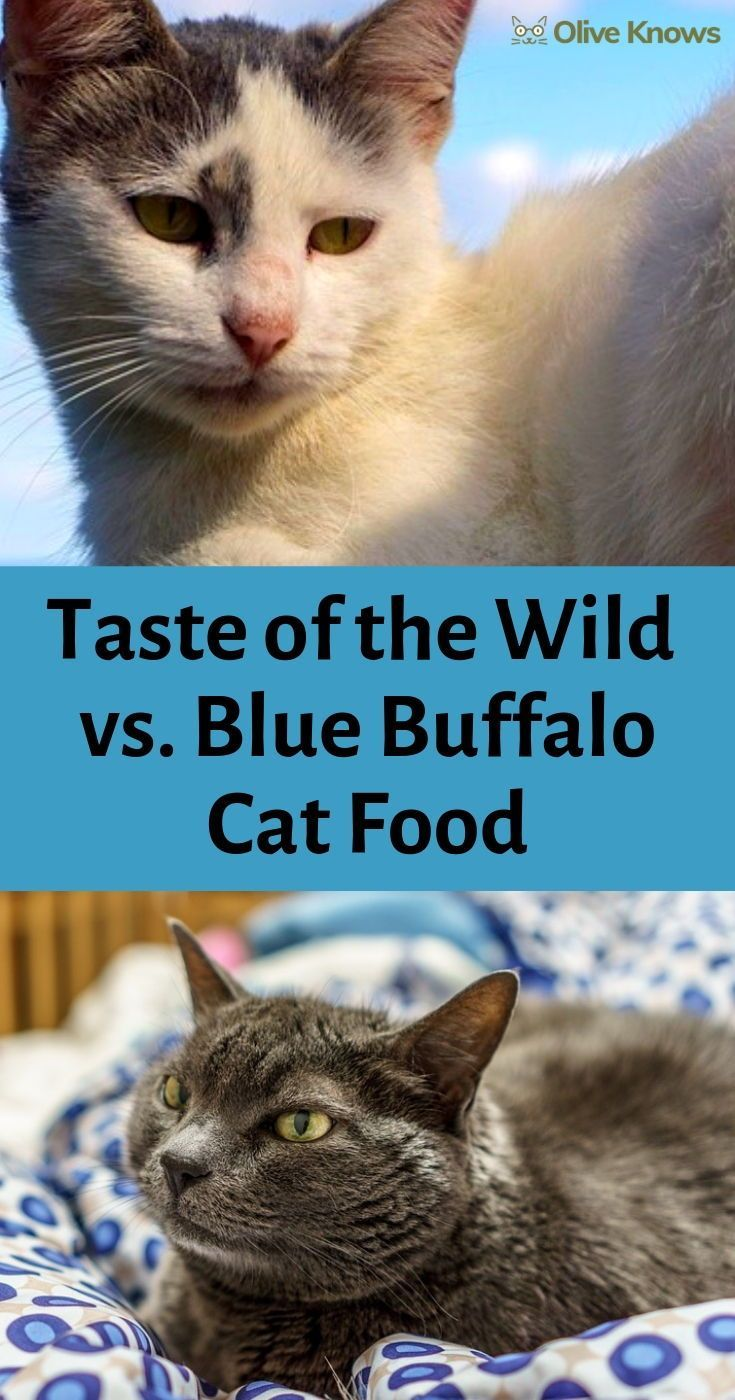Taste Of The Wild Vs Blue Buffalo Cat Food Which Is Best For You Every Cat Has Their Own Individual Set Of Dietary Needs And Nut Cats Cat Food Cat Training