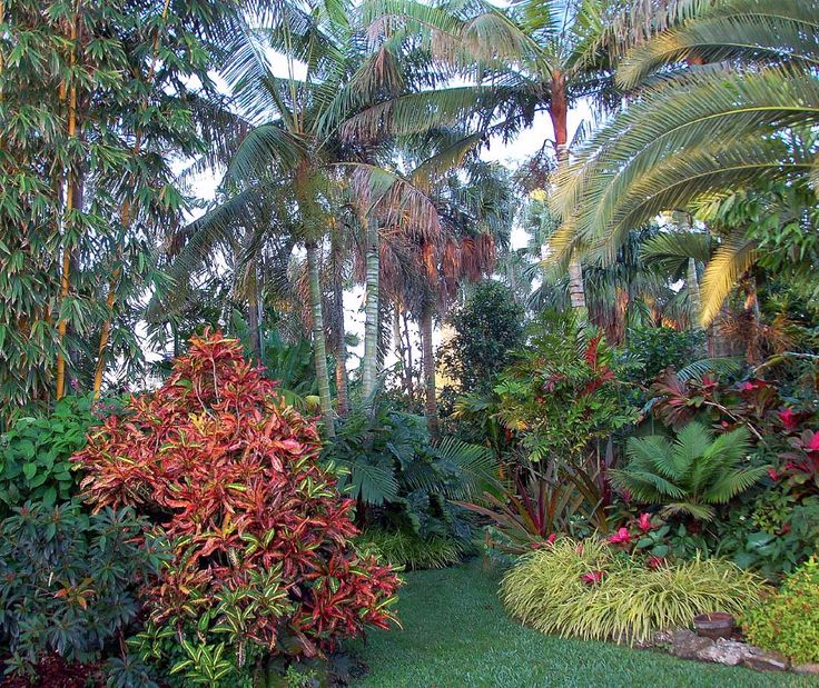 Tropical Home Garden Design Ideas: 81 Best Front Palm Tree Garden Images On Pinterest