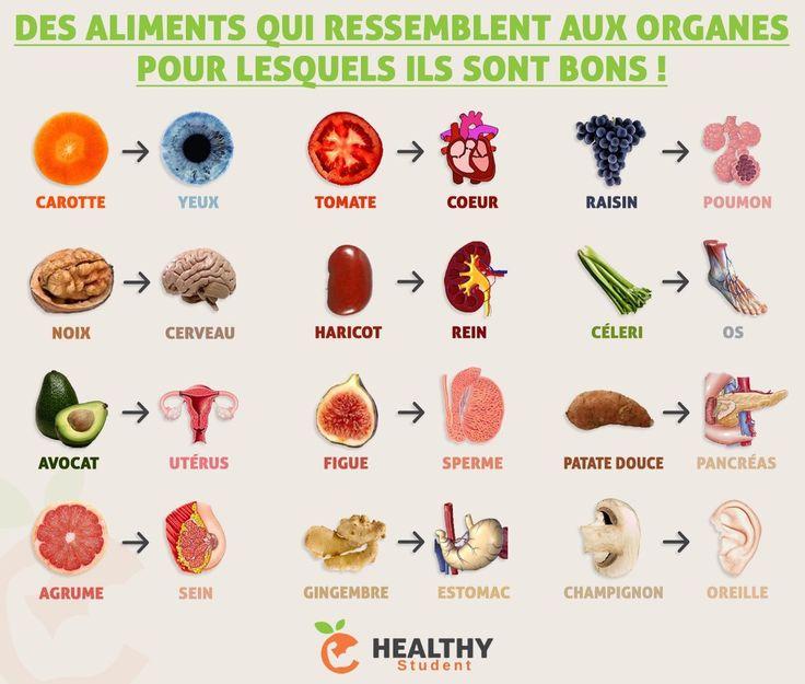 Parce que la nature n'a rien fait au hasard, voici quelques aliments ressemblant aux organes pour lesquels ils sont bons ! 💪 | Healthy Student par Valentin Loiseau